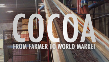 cocoa from farmer to world market
